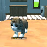 Online game Cat Simulator : Kitty Craft
