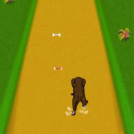 Dog Dash